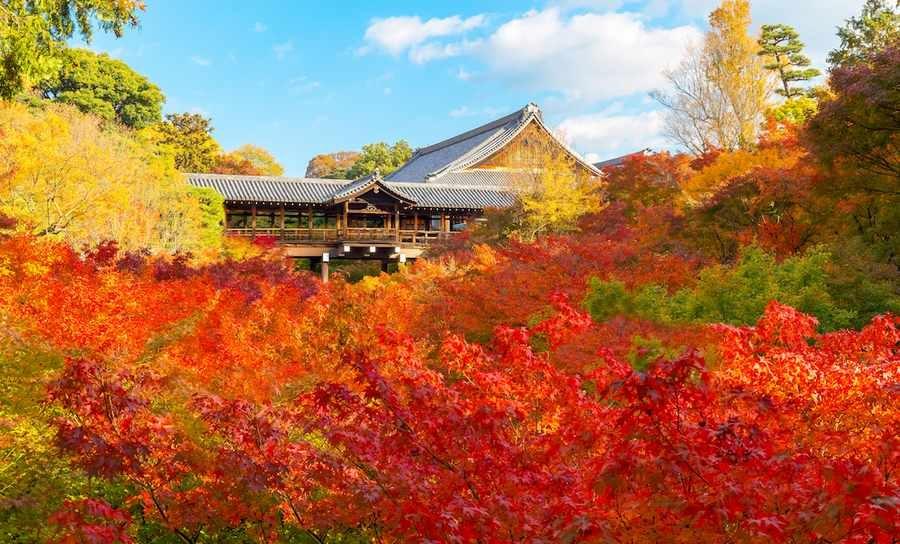 زیباترین چشم انداز پاییزی ژاپن