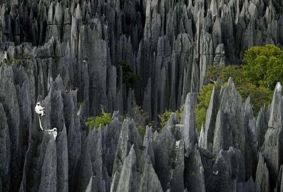جنگل سنگی +تصویر