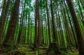 پیامد های اصلی تخریب منابع طبیعی