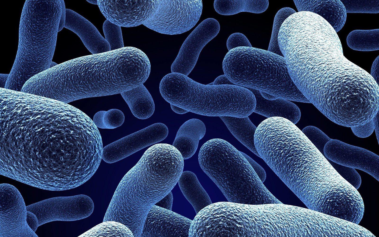 باکتریهایی که خطر بیماریهای قلبی را کاهش میدهند