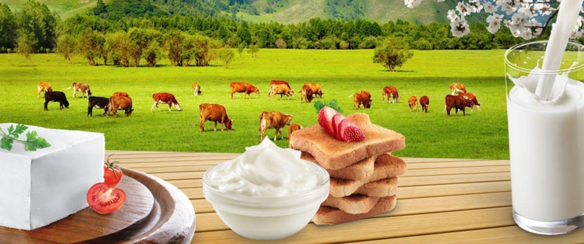 هشدار در خصوص مصرف لبنیات و گوشت سنتی