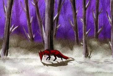 روباه ایرانی در راه جشنواره پرتغالی