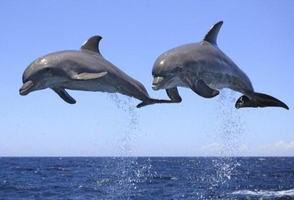 وقتی زیستگاه دلفین ها تهدید می شود
