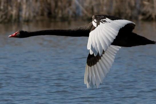 آغاز صدور مجوز شکار پرندگان در شادگان