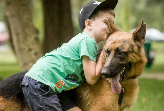 چگونه سگها از بدو تولد، انسانها را میفهمند؟!