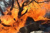 بدهی ۲۰ میلیارد تومانی سازمان جنگلها برای اطفای حریق هوایی