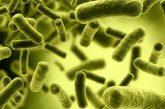 میکروب هایی که برای سلامت بدن مفید هستند