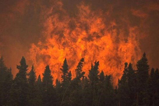 وابستگی معیشت یک ونیم میلیون نفر به جنگل های زاگرس