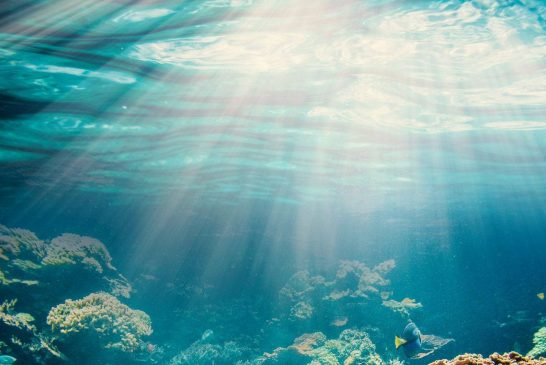 داستان زمانی که بشریت عاشق زندگی زیر آب شد و از آن دست نکشید