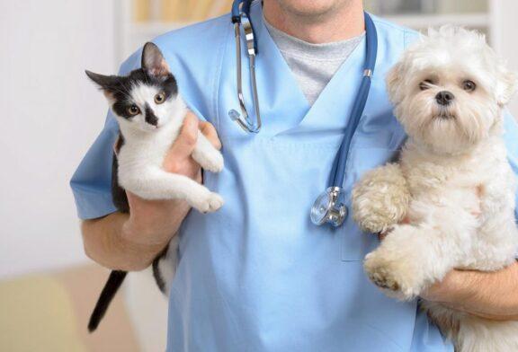جراحی زیبایی حیوانات دروغ است