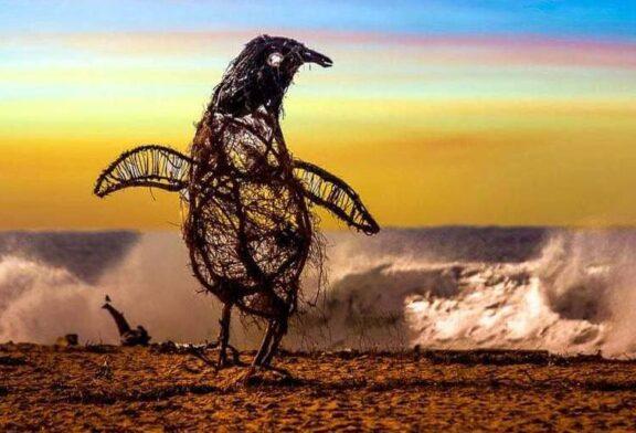 موجودات دریایی از جنس چوبهای آب آورده + تصویر