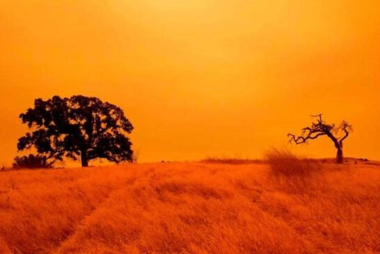 سانفرانسیسکو نارنجی شد + تصویر
