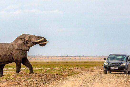 فرار خودرو از حمله فیل در حیات وحش آفریقا + تصویر