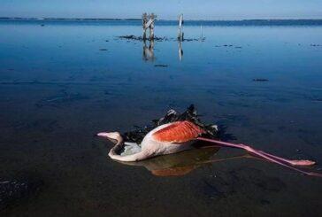 علت قطعی مرگ پرندگان میانکاله مشخص شد