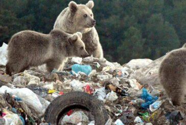 زباله گردی خرسهای قهوهای! + تصویر