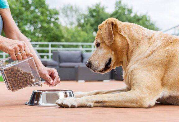 چگونه باید به سگ ها غذا بدهیم؟